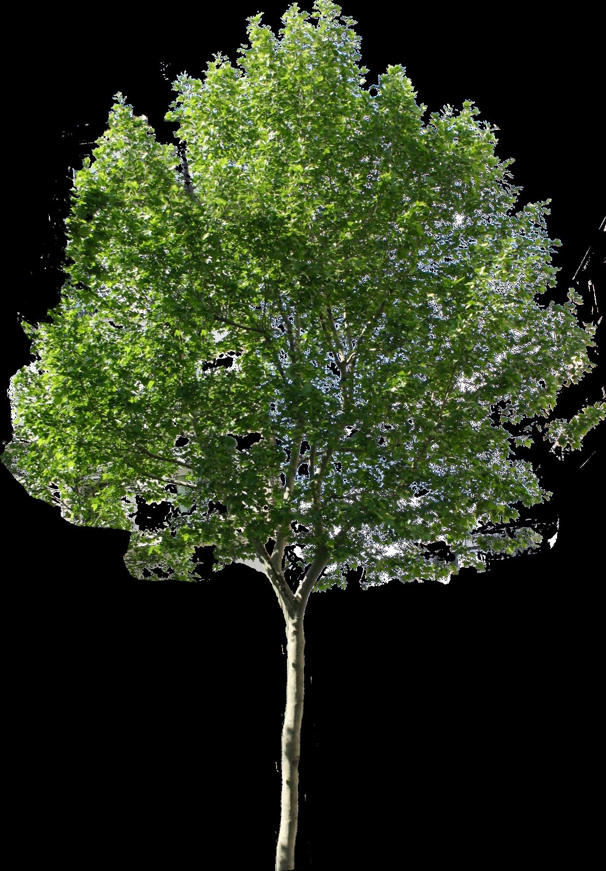 Drzewa natura